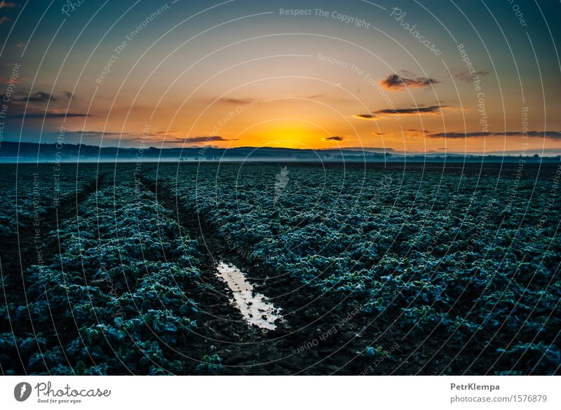 Sunrise above the field Nature Landscape Plant Earth Sky Sunset Sunlight Spring Autumn Grass Agricultural crop Blue Yellow Green Orange Colour photo