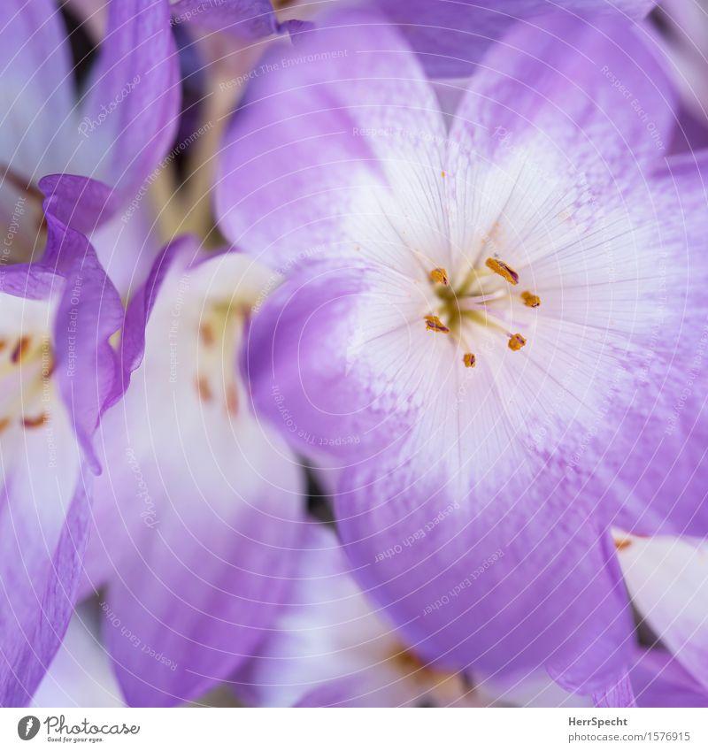 leadamles Plant Blossom Fresh Nerdy Beautiful Violet White Flower Bouquet Flower stalk Pistil Blossom leave Blossoming Calyx Spring Spring flower Summer Nature