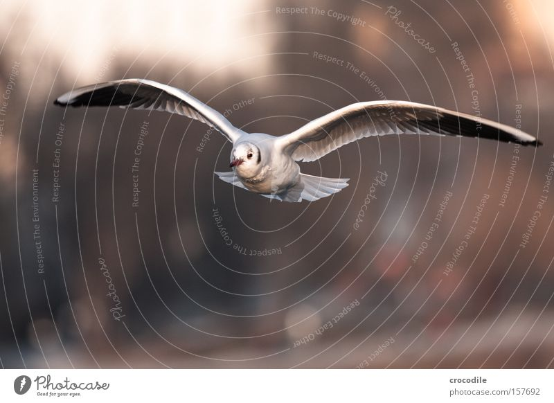 a little bird comes flying... Glide Flying Hover Air Beak Speed Free Freedom Bird Beautiful seagull Aviation Feather Wing