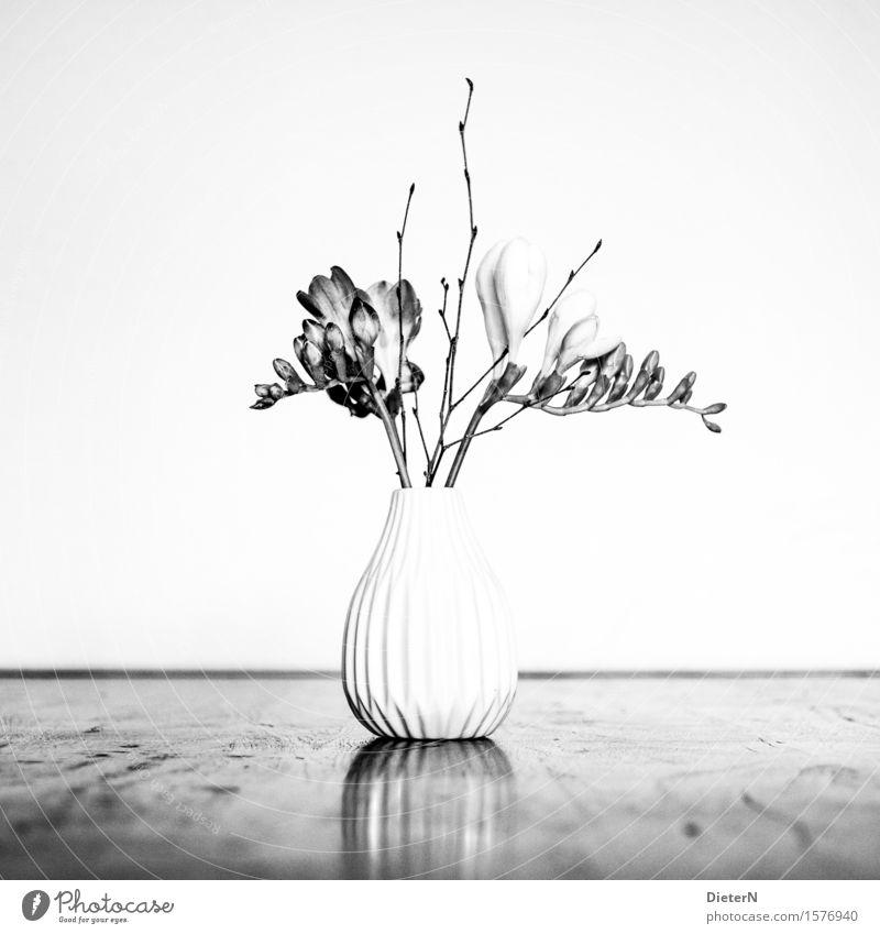 CLASSICAL Plant Flower Bushes Leaf Blossom Gray Black White Vase Flower vase Bouquet Flower stalk Black & white photo Interior shot Studio shot Detail Deserted