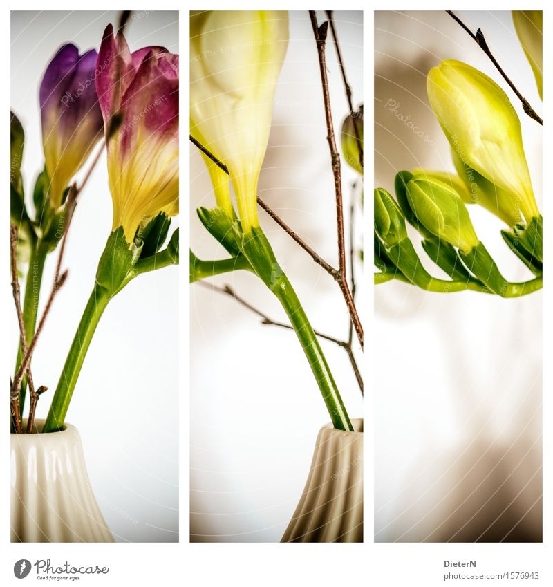 threesome Plant Flower Leaf Blossom Yellow Green White Vase Isolated Image Bouquet Flower stalk Triptych Colour photo Multicoloured Interior shot Studio shot