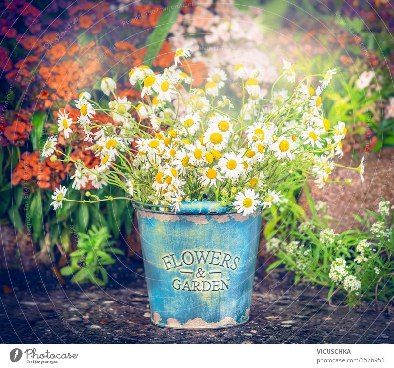Bucket with daisies over flowers garden background Style Design Summer Living or residing Garden Decoration Nature Plant Sunlight Spring Autumn