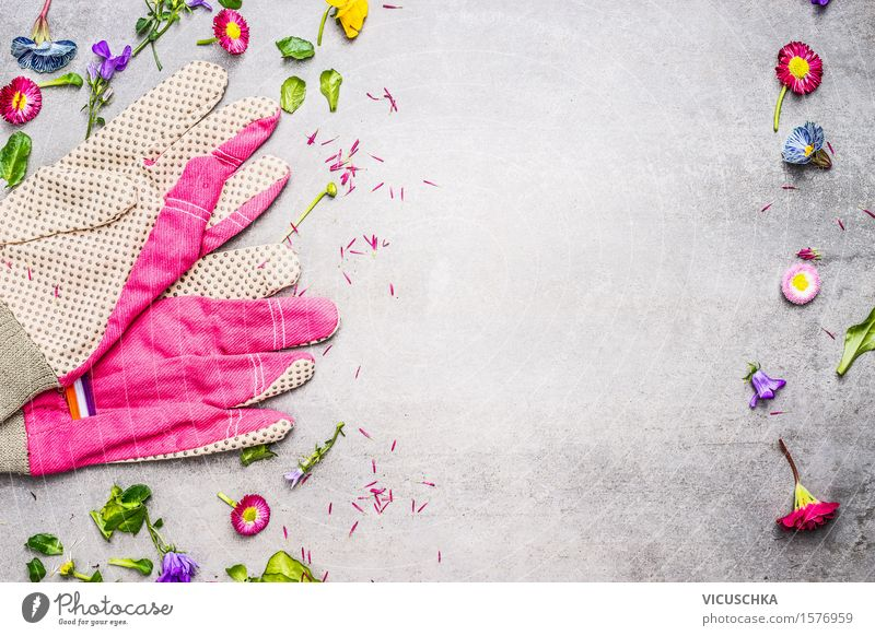 Garden gloves with flowers, leaves and plants Style Summer Living or residing Table Nature Plant Flower Leaf Blossom Blossoming Pink Design Equipment Gardening