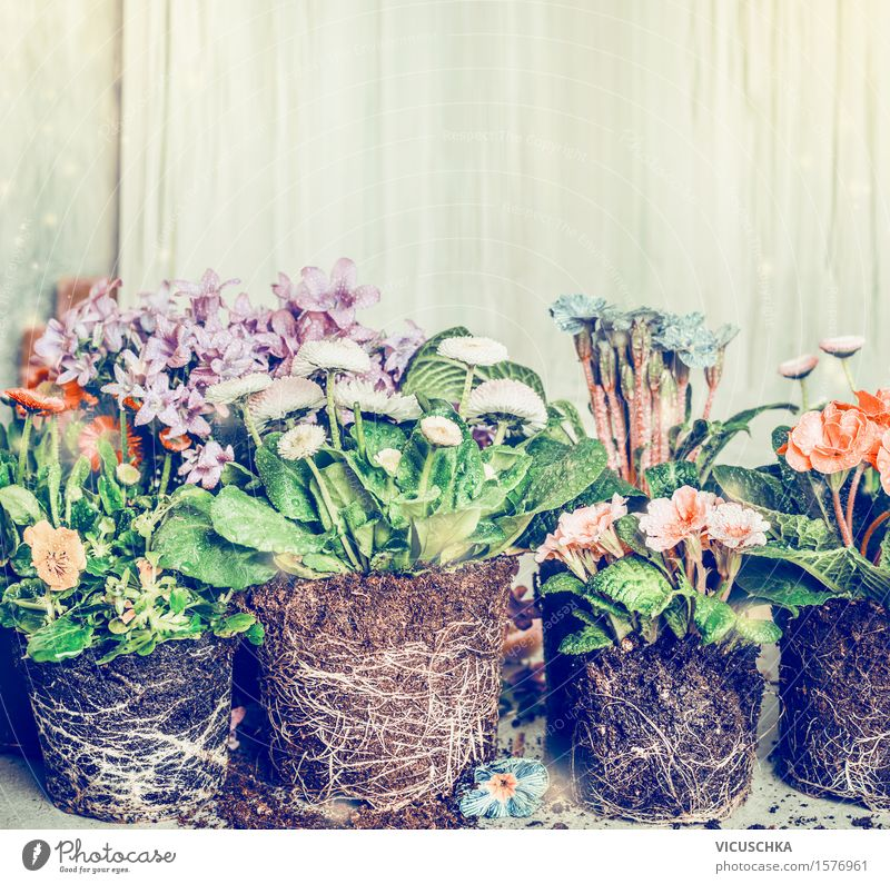 flowers for planting in the garden or pots Style Design Leisure and hobbies Living or residing Garden Decoration Table Nature Plant Earth Spring Summer Autumn