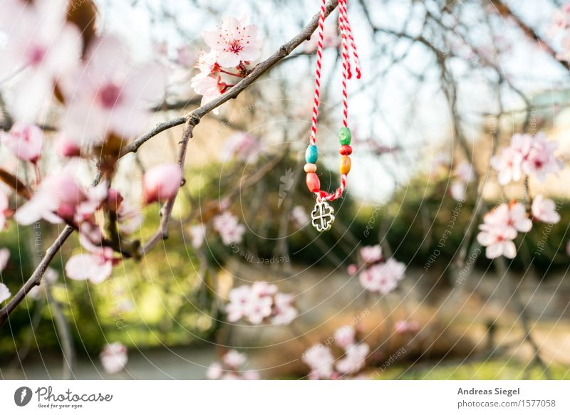 lucky charm Lifestyle Nature Plant Spring Beautiful weather Tree Blossom Cherry blossom Cherry tree Park Accessory Jewellery Kitsch Odds and ends