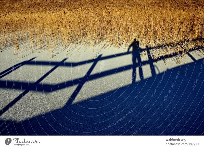 Human being Winter Cold Snow Ice Shadow Common Reed Photographer Reeds
