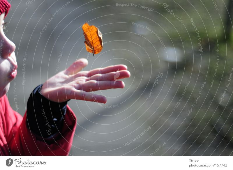 a single moment with you Child Girl Leaf Autumn Blow Weightlessness Childlike Precious Children`s hand Peace played Snapshot