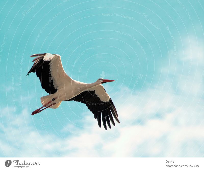 high up Colour photo Exterior shot Aerial photograph Day Shadow Animal portrait Full-length Forward Calm Trip Far-off places Birthday Aviation Flying Free Large