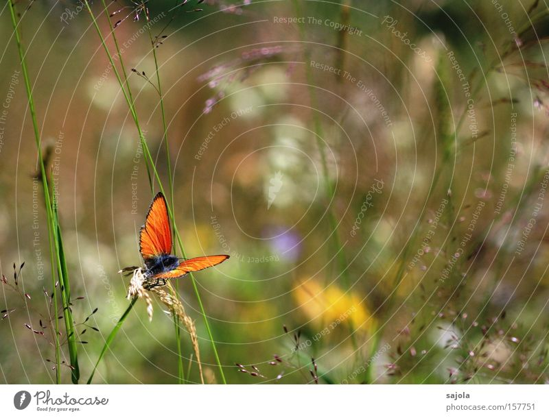 Nature Flower Plant Summer Animal Meadow Grass Orange Wait Environment Sit Esthetic Wing Insect Alps Butterfly