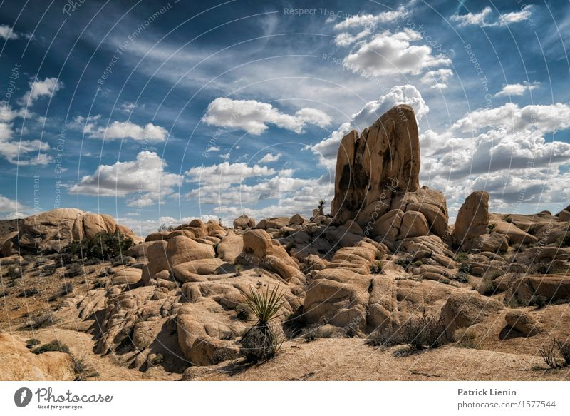 Joshua Tree National Park Lifestyle Beautiful Vacation & Travel Adventure Far-off places Freedom Expedition Summer Mountain Environment Nature Landscape