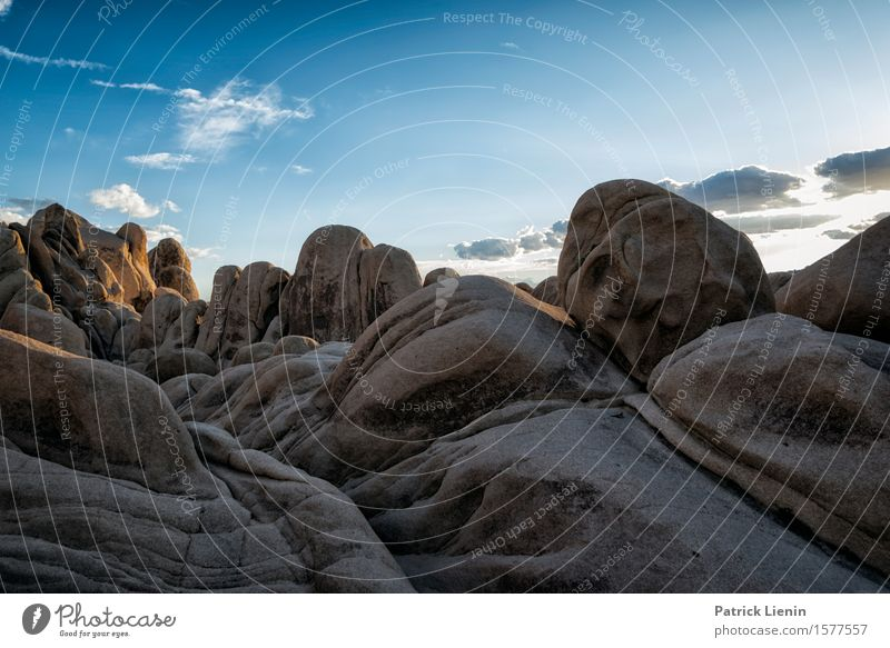 Joshua Tree National Park Beautiful Life Harmonious Well-being Contentment Senses Relaxation Vacation & Travel Adventure Far-off places Expedition Summer