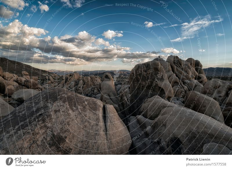 Joshua Tree National Park Beautiful Well-being Contentment Senses Vacation & Travel Adventure Far-off places Expedition Summer Mountain Environment Nature