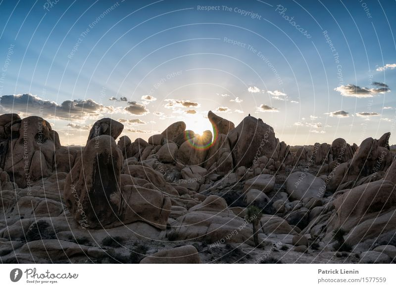 Joshua Tree National Park Beautiful Harmonious Well-being Senses Relaxation Vacation & Travel Adventure Far-off places Expedition Summer Sun Mountain