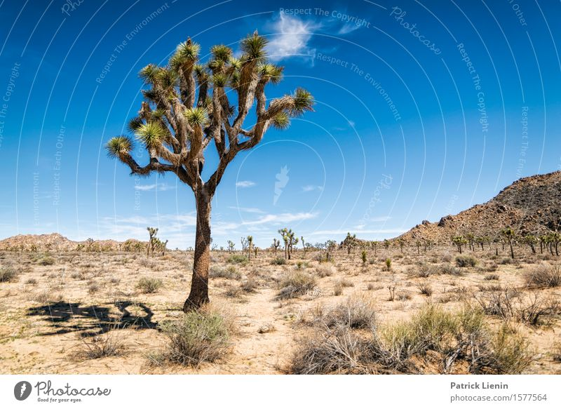 Joshua Tree Beautiful Life Harmonious Vacation & Travel Adventure Far-off places Freedom Expedition Summer Mountain Environment Nature Landscape Plant Elements