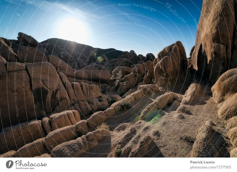 Joshua Tree National Park Beautiful Well-being Contentment Vacation & Travel Adventure Far-off places Expedition Summer Sun Mountain Environment Nature