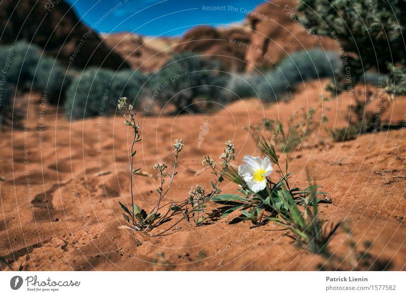 Desert Sand Beautiful Harmonious Contentment Senses Relaxation Vacation & Travel Adventure Expedition Summer Mountain Environment Nature Landscape Plant