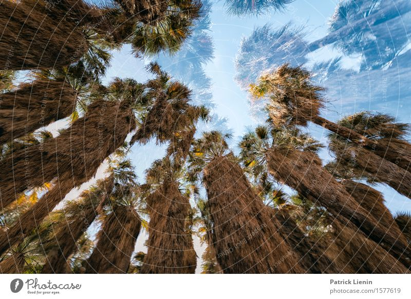 Desert Dream Beautiful Vacation & Travel Adventure Expedition Summer Mountain Environment Nature Landscape Sky Climate Tree Oasis Green California South West