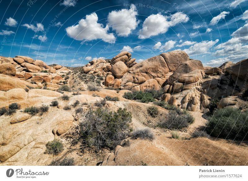 Joshua Tree National Park Beautiful Vacation & Travel Adventure Far-off places Expedition Summer Mountain Environment Nature Landscape Plant Elements Earth Sand