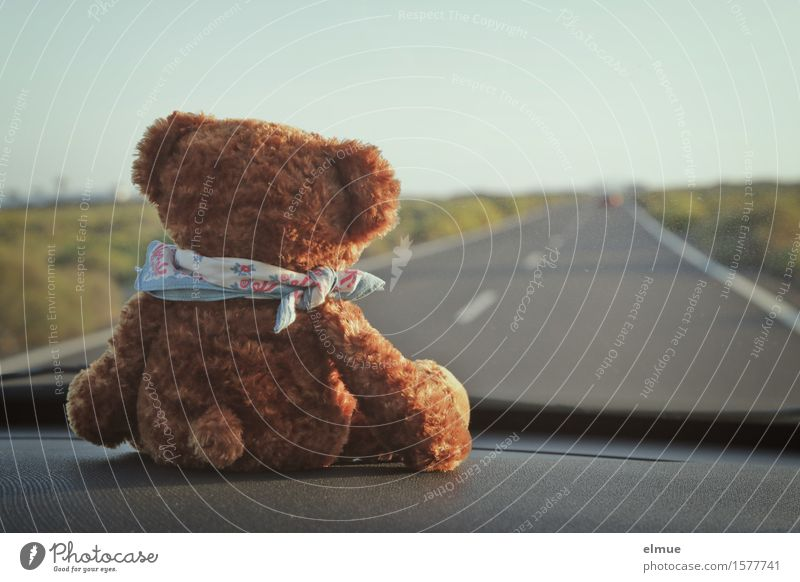 Teddy Per goes on holiday (2) Contentment Relaxation Vacation & Travel Trip Adventure Far-off places Summer vacation Landscape Beautiful weather Street Car Toys