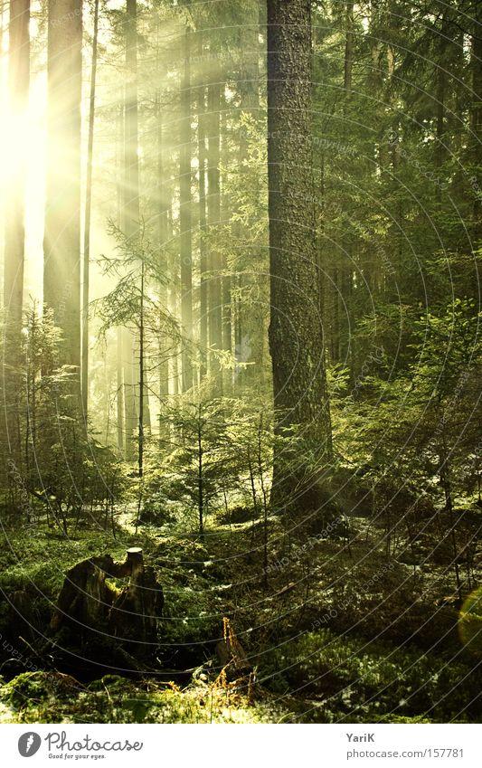 Tree Sun Green Yellow Forest Warmth Bushes Light Radiation Illuminate Woodground Beam of light