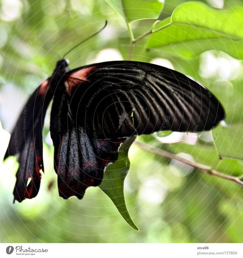 spring comes despite snow Butterfly Living thing Tree Leaf Wing Delicate Beautiful Branch Flying Aviation