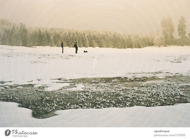 Peace. Winter Snow Field White Meadow Forest Water Freeze Frozen Ice Fog Winter forest Cold