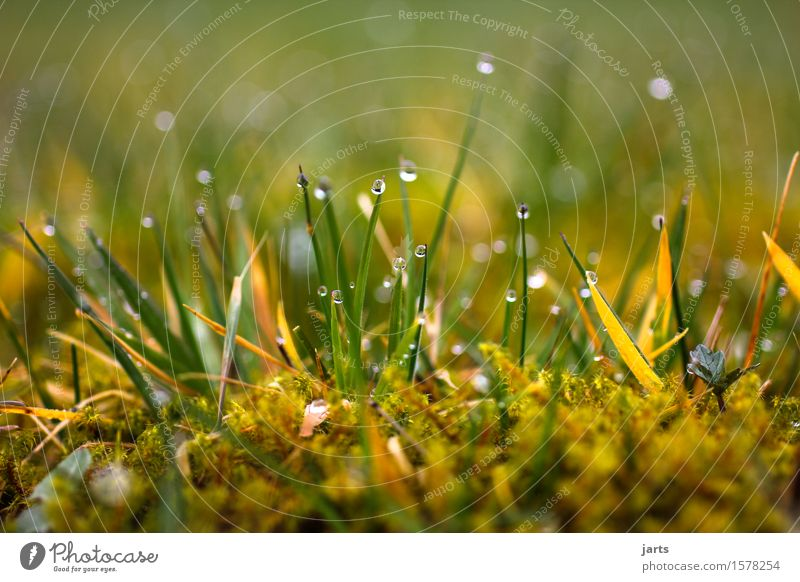 in the morning Environment Plant Drops of water Grass Moss Meadow Fresh Glittering Wet Natural Soft Serene Calm Nature Colour photo Exterior shot Close-up
