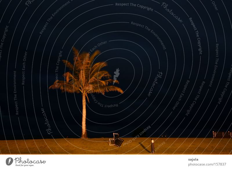 Sky Nature Blue Plant Beach Vacation & Travel Loneliness Environment Sadness Coast Lawn Threat Bench Gale Palm tree Illuminate