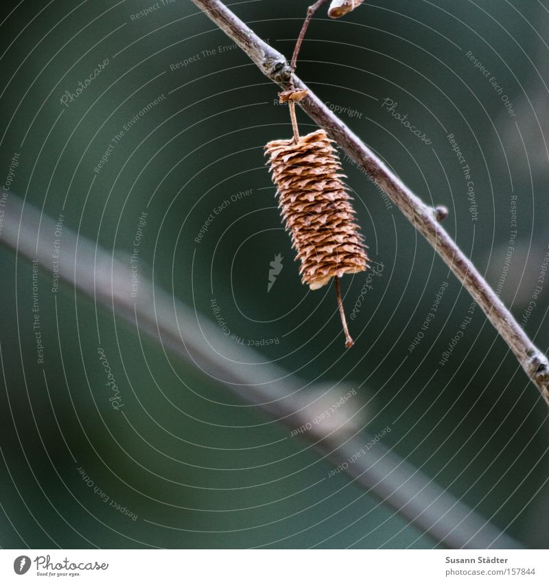 Tree Green Loneliness Autumn Bushes Branch Blossoming Twig Maple tree Beech tree