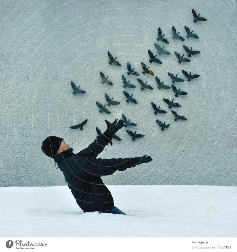 Human being Snow Bird Flying Aviation Feather Catch Fairy Flock Flock of birds Wall decoration Bird's cage Operetta Wall cupboard