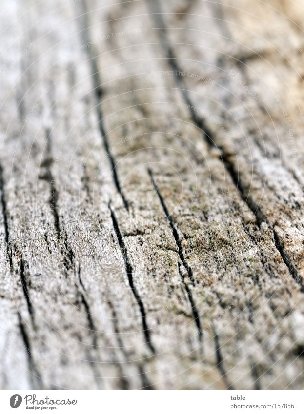 Old Green Black Death Wood Gray Dry Crack & Rip & Tear Macro (Extreme close-up) Weathered Column Firewood Log