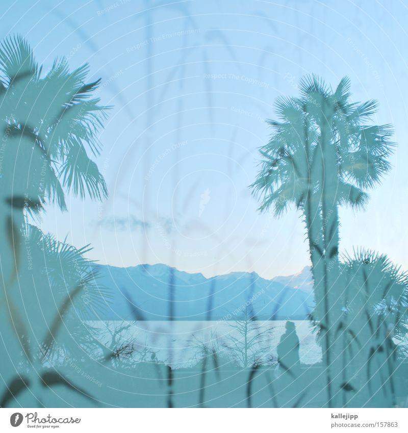 Water Plant Vacation & Travel Mountain Lake Coast Switzerland Alps Palm tree Promenade Lake Geneva