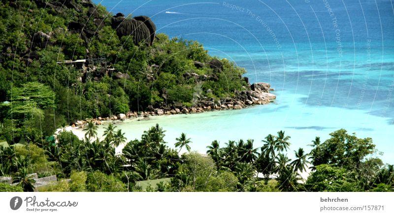 A piece of heaven Seychelles Palm tree Dream island Honeymoon Wanderlust Beach Bay Water Ocean Reef Snorkeling To enjoy Coast Praslin Vacation & Travel