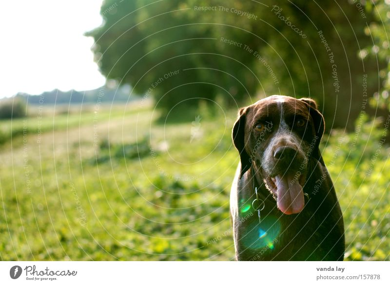 Nature Sun Green Summer Animal Meadow Dog Walking To go for a walk Mammal Pet Tongue Hunter Lens flare Profession
