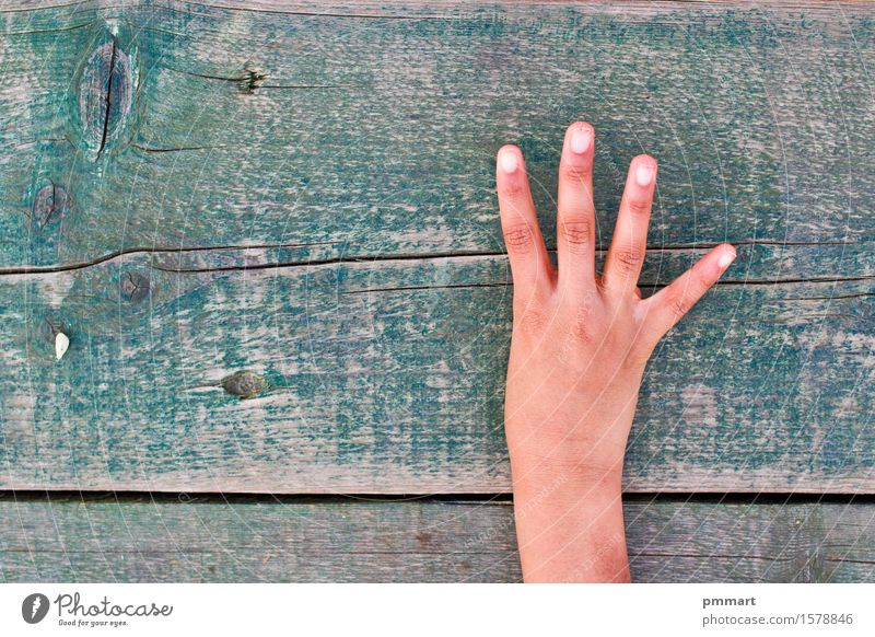 hand, numbers and wood Education School Office Human being Girl Boy (child) Woman Adults Man Hand Fingers Tree Ring Digits and numbers Old Brown Green Black