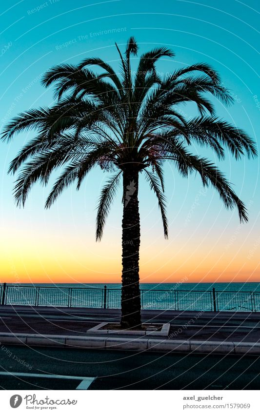 Nice Palmtree Vacation & Travel Tourism Adventure Far-off places Summer Summer vacation Beach Ocean Landscape Sunrise Sunset Beautiful weather Exotic Palm tree