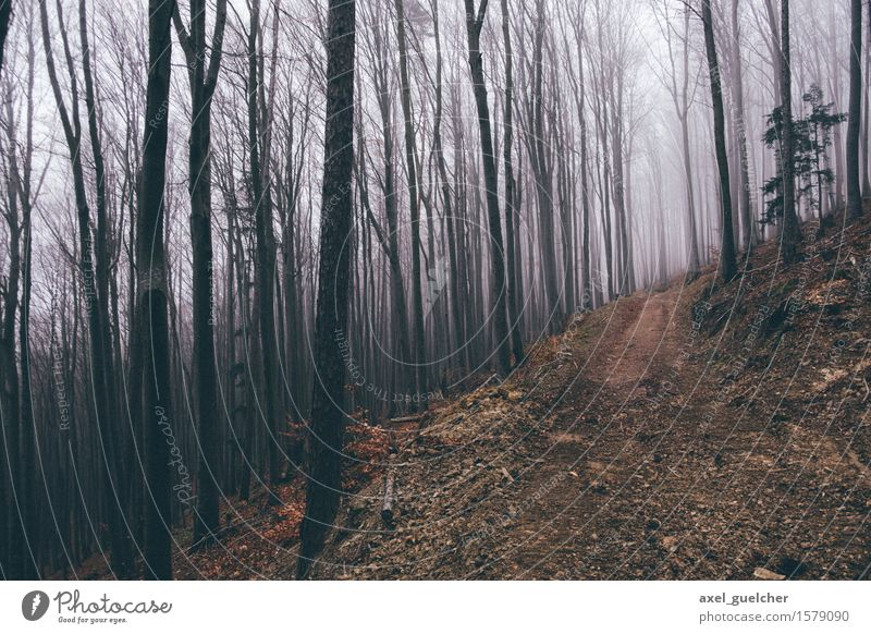 Gloomy Woods Nature Landscape Autumn Winter Bad weather Fog Tree Forest Lanes & trails Creepy Adventure Mysterious Cold Colour photo Exterior shot Deserted