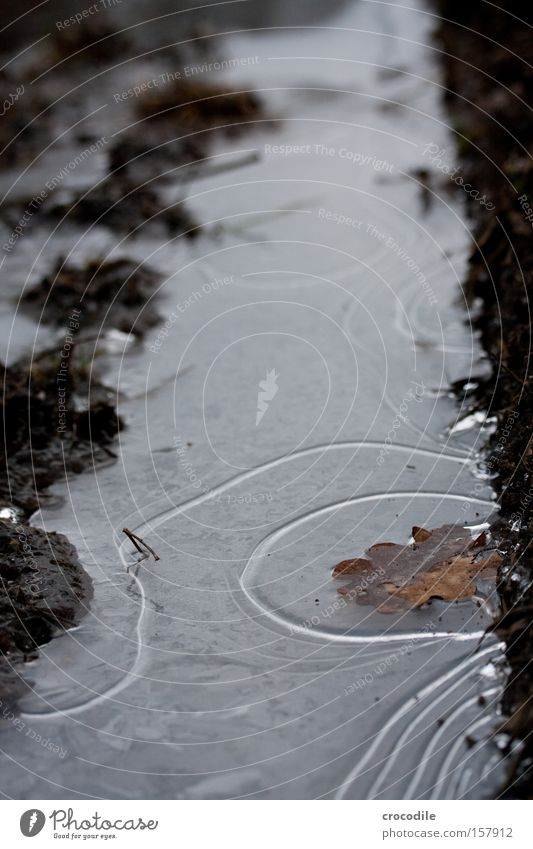 Water Winter Leaf Cold Ice Line Earth Frozen Footpath Curve Furrow