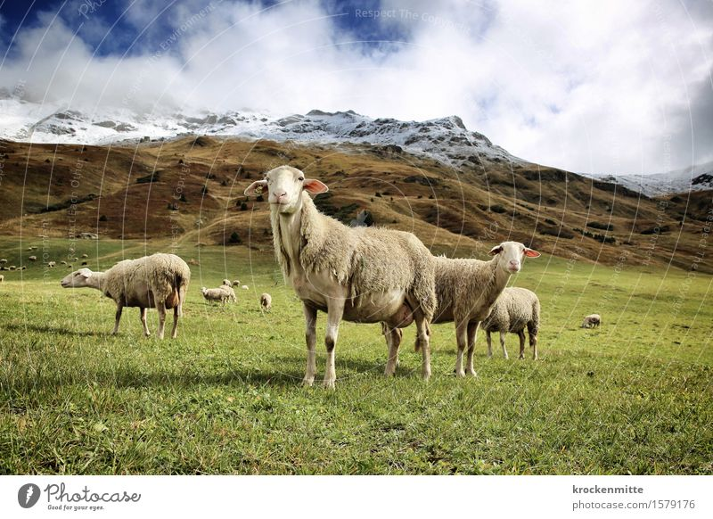 completely off the wool Mountain Hiking Nature Landscape Plant Earth Sky Clouds Autumn Bushes Moss Foliage plant Meadow Hill Rock Alps Peak Snowcapped peak