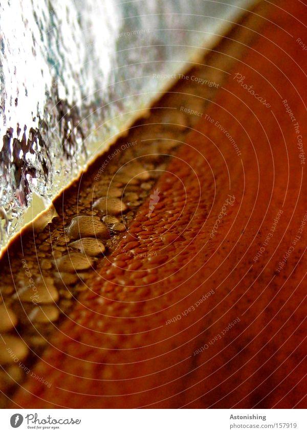 leaky? Window Water Drops of water Wood Brown Wet Damp Perspective Vanishing point Glass Bathroom