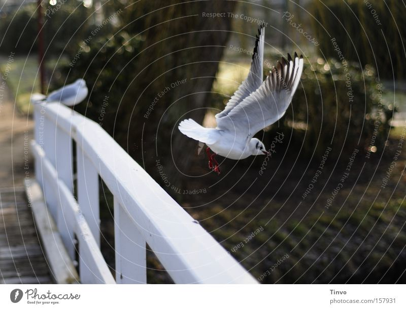Calm Bird Park Flying Beginning Wing Seagull Bridge railing Departure Flight of the birds Wooden bridge