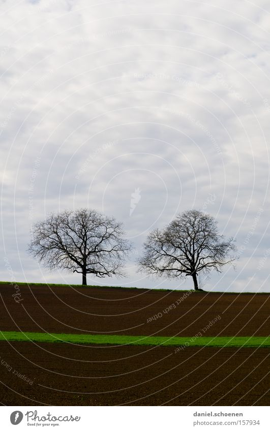 green streak of hope Spring Field Tree Sky Clouds Green Agriculture Brown Earth