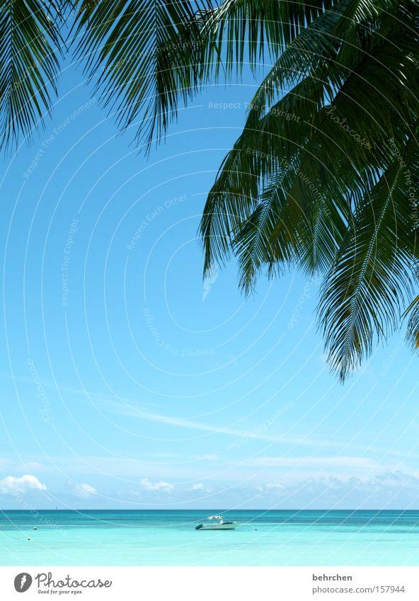 Sky Ocean Beach Far-off places Dream Watercraft Coast Horizon Fantastic Turquoise Palm tree Tree Wanderlust Paradise Honeymoon Seychelles