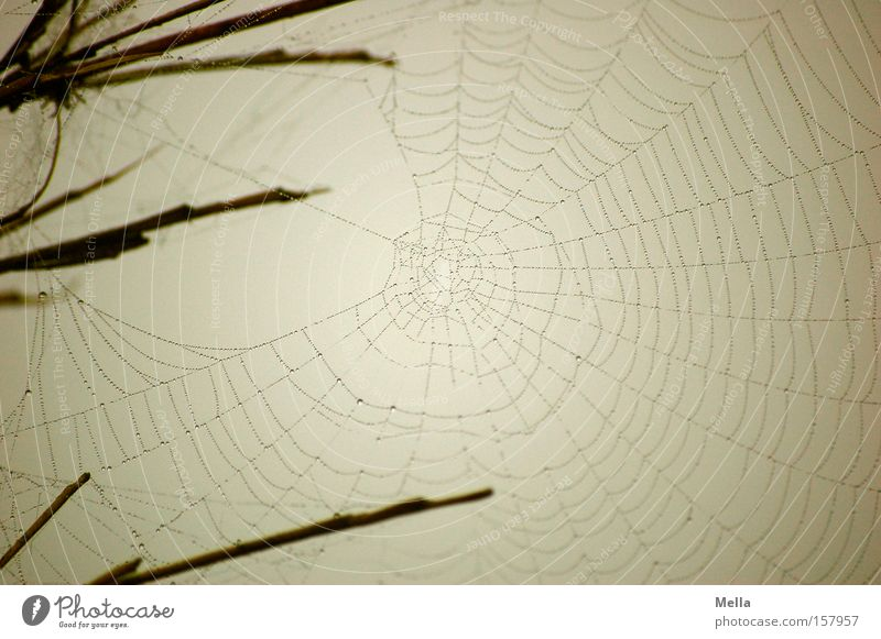 Baumeister's work Net Spider's web Build Woven Spun Fine Delicate Gray Wet Dreary Gloomy built Drops of water droplet