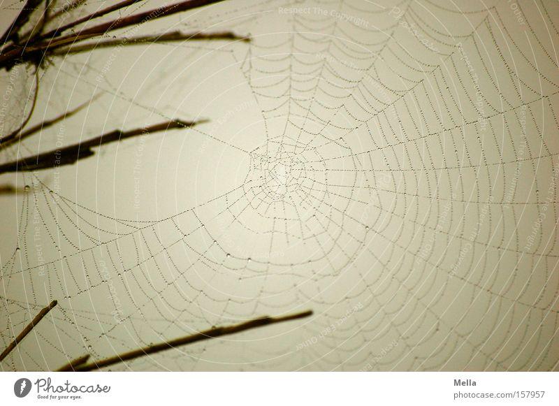 Gray Drops of water Wet Gloomy Net Delicate Build Fine Dreary Spider's web Woven Spun