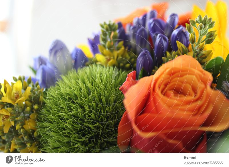 Birthday Bouquet Nature Landscape Plant Flower Bushes Moss Rose Tulip Emotions Grateful Curiosity Birthday gift Colour photo Multicoloured Interior shot