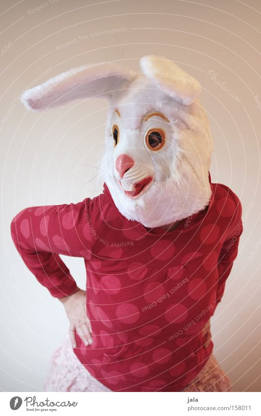 Swing your hips, Hasi. Hare & Rabbit & Bunny Easter Bunny Carnival Dress up Animal White Funny Woman Mask Costume Dance Joy