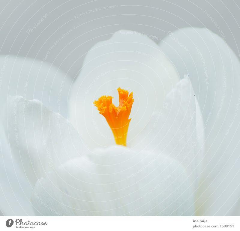 Farben erwachen Nature Plant White Environment Yellow Spring Orange