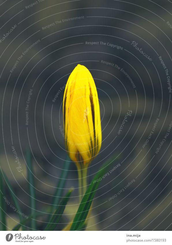 Nature Plant Colour Environment Yellow Blossom Spring Natural Garden Park Growth Fresh Esthetic Joie de vivre (Vitality) Uniqueness New