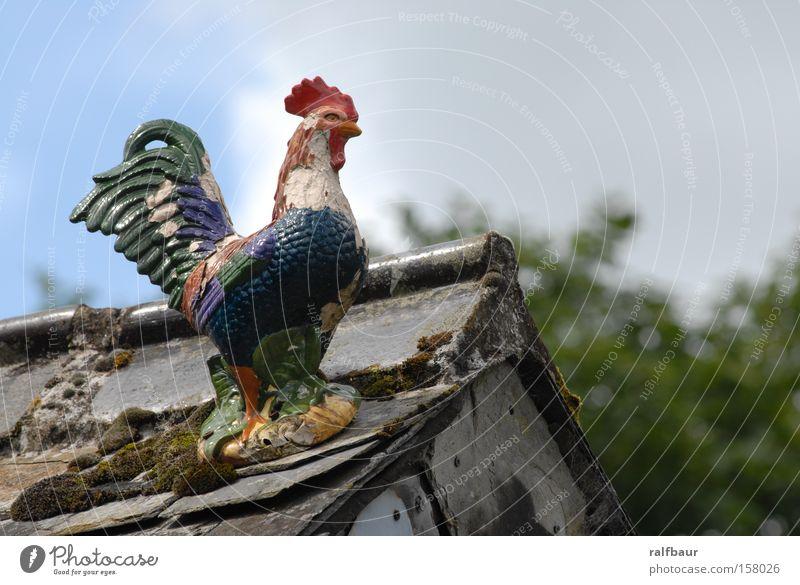 Freedom Bird Roof Decoration Kitsch Barn fowl Rooster Cockscomb Animal figure